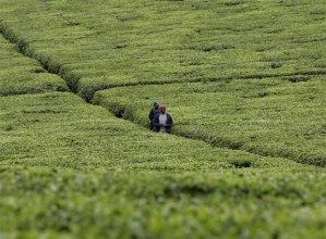 Explotación agrícola en Kenya (pincha en la foto para ir a un reportaje sobre el tema en El País